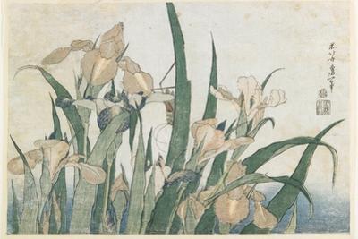 Iris Flowers and Grasshopper, C.1830-31 by Katsushika Hokusai