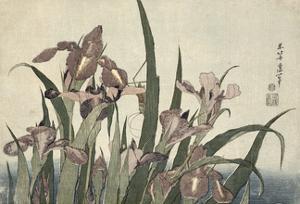 Irises and Grasshopper, Pub. by Nishimura Eijudo, C.1832 by Katsushika Hokusai