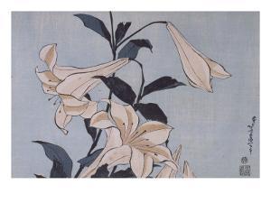 Lys by Katsushika Hokusai