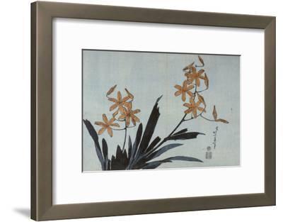 Orchidées orange