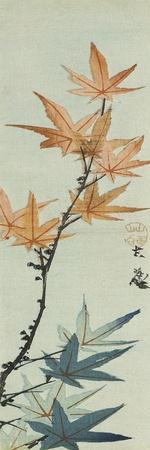 Branche d'érable