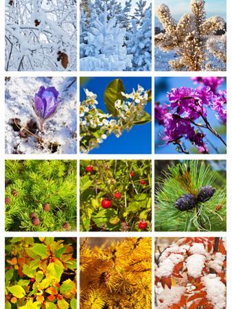 Collage. Twelve Months. Calendar by katvic
