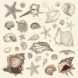 Sea Shells Collection. by Katyau