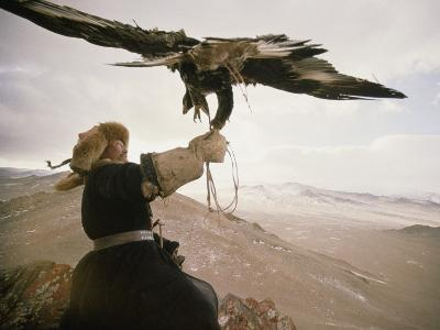 Kazakh Hunter Strains to Support a Golden Eagle-David Edwards-Photographic Print