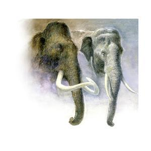 Painting Comparison of a Woolly Mammoth and an Asian Elephant by Kazuhiko Sano