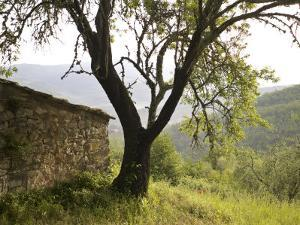 Countryside Landscape Overlooking Forest, an Old Stone Dwelling by Keenpress