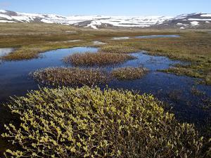 Landscape of Adalvik Bay by Keenpress
