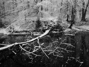 Trees Blanketed with Snow Along a Potomac River Canal by Keenpress