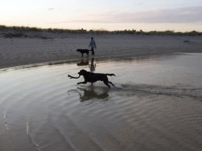 Twp Black Labradors Running on Beach in Cape Cod, United States