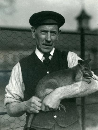 Keeper G. Blore Holding a Wallaby at London Zoo, October 1920-Frederick William Bond-Photographic Print