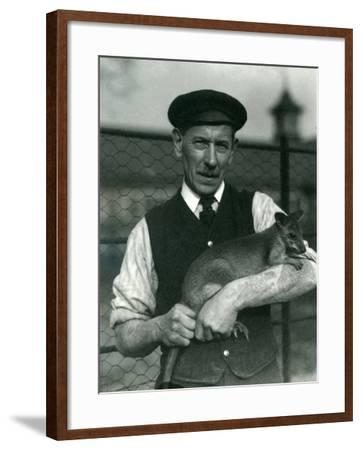 Keeper G. Blore Holding a Wallaby at London Zoo, October 1920-Frederick William Bond-Framed Photographic Print