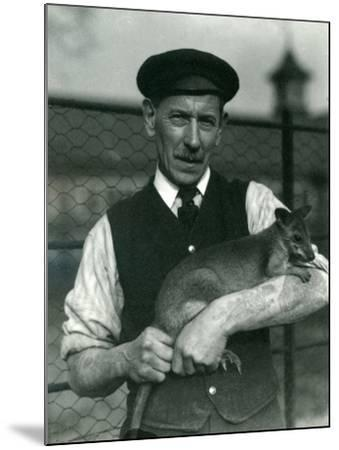 Keeper G. Blore Holding a Wallaby at London Zoo, October 1920-Frederick William Bond-Mounted Photographic Print