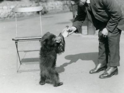 Keeper Harry Warwick Bottle Feeds a Sloth Bear Cub at London Zoo, August 1921-Frederick William Bond-Photographic Print