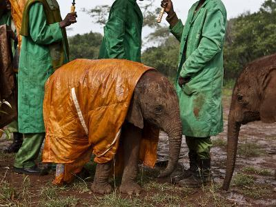 Keepers Protect a Baby Elephant From the Cold and Rain With a Custom-Made Raincoat-Michael Nichols-Photographic Print