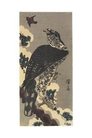 Eagle and Sparrow