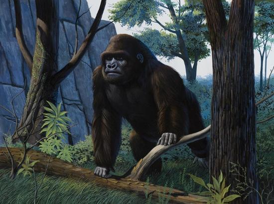 keith-freeman-moutain-gorilla
