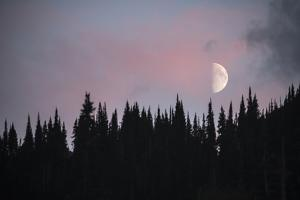 A Half Moon Above Evergreen Trees in Montana's Glacier National Park by Keith Ladzinski