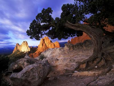 A Juniper Frames South Gateway Rock in Garden of the Gods, Colorado