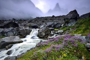 A Mountain Stream Cascading over Boulders and Past Wildflowers in Bloom by Keith Ladzinski