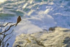 A Raptor on the Coast, Cape Town, South Africa by Keith Ladzinski