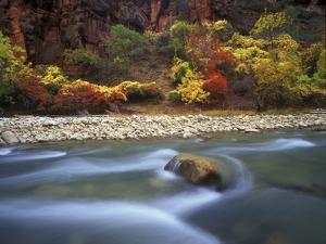 Autumn Color in Zion National Park, Utah by Keith Ladzinski
