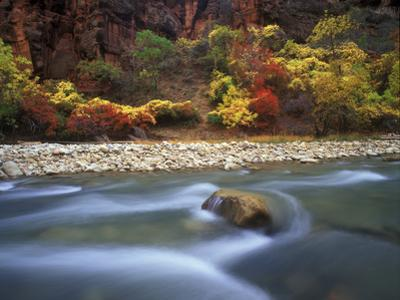 Autumn Color in Zion National Park, Utah