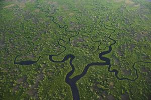 Florida's Everglades are Becoming Saltier and Less Hospitable to their Native Species by Keith Ladzinski