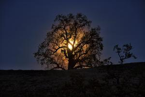 Moonrise and Tree Silhouette, Big Sur, California by Keith Ladzinski