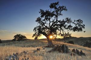 Open Field with Rock and Oak Tree Near Yosemite National Park, California by Keith Ladzinski