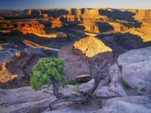 Sunrise at Dead Horse Point with Juniper, Overlooking Canyonlands National Park by Keith Ladzinski