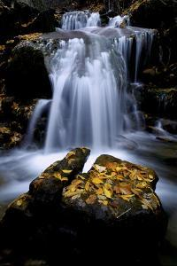 Waterfall and Rock Covered with Fallen Autumn Leaves, White River National Forest by Keith Ladzinski