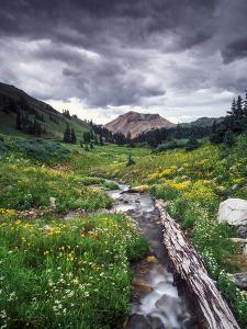 Wildflowers and Stream Near Black Bear Pass, San Juan Mountains by Keith Ladzinski
