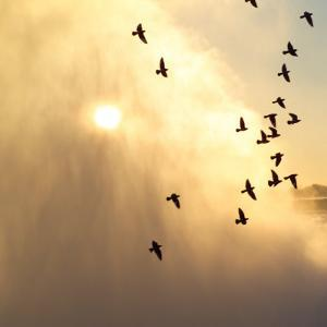 Birds Flying Above Niagara Falls, Ontario, Canada by Keith Levit