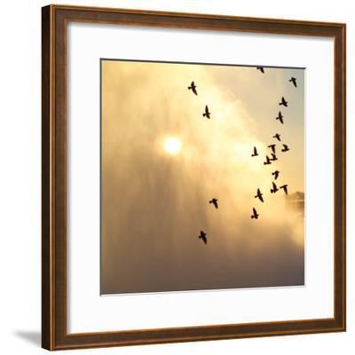 Birds Flying Above Niagara Falls, Ontario, Canada