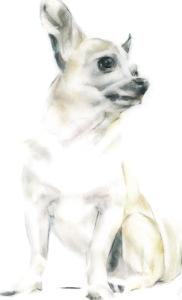 Rudy The Chihuahua by Kellas Campbell