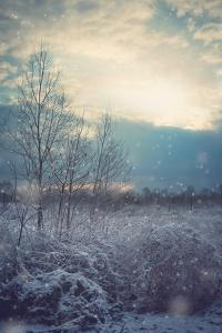A Winter's Day by Kelly Poynter