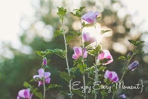 Enjoy Every Moment by Kelly Poynter