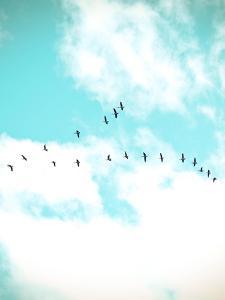 Flying V by Kelly Poynter