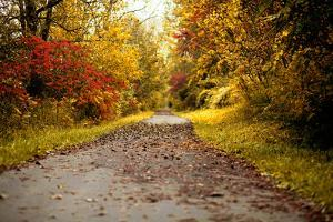 Quiet Autumn Path by Kelly Poynter