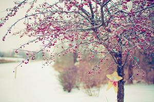 Winter Berries I by Kelly Poynter