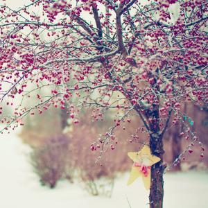 Winter Berries II by Kelly Poynter