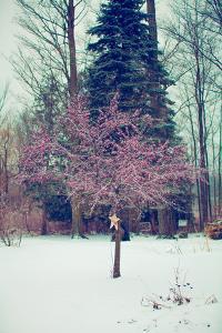 Winter Berries III by Kelly Poynter