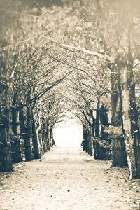 Woods by Kelly Poynter