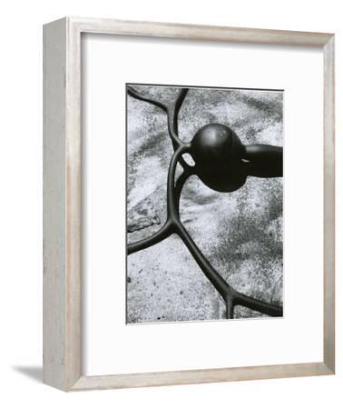 Kelp, Baja California, 1967-Brett Weston-Framed Photographic Print