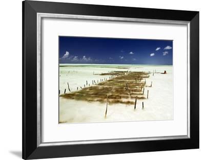 Kelp Farming, Zanzibar-Tony Camacho-Framed Photographic Print