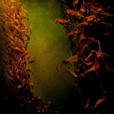 Kelp Seaweed Flowing in Water-Trigger Image-Photographic Print