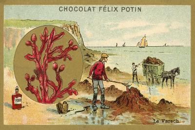 Kelp--Giclee Print