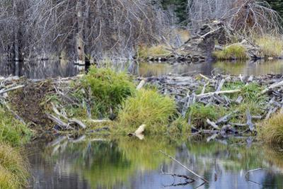 Beaver Pond, Dam and House by Ken Archer