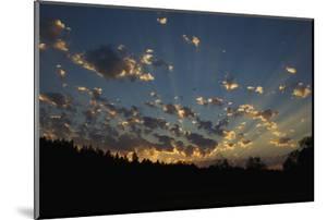 Red-Tail Hawk Sunset by Ken Archer
