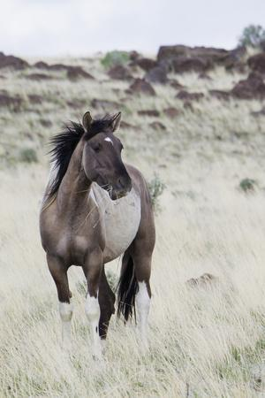 Wild Horse, Steens Mountains